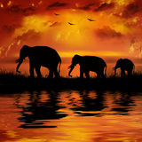 Elephants. On a beautiful sunset background Stock Image