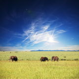 Elephants Stock Photos