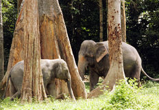 Elephants. Mother elephant and its calf in a jungle stock photos