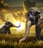 Elephants. Two elephants in a grassy area with a sunset or sunrise as the backdrop