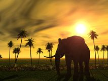 Elephants Royalty Free Stock Photo