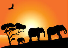 Elephants. Illustration of African elephants at sunset Stock Images