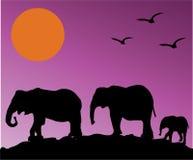Elephants. Illustration of African elephants at sunset Royalty Free Stock Photography