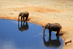 Elephants. In a water hole Royalty Free Stock Photos