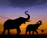Elephants. Couple of elephants on sunset background Royalty Free Stock Photo