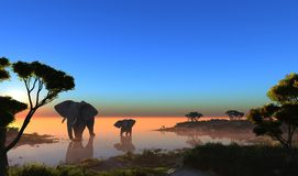 Elephants. Stock Photo