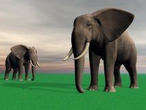 Elephants Royalty Free Stock Photo