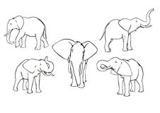 Elephants. Set of vector elephants, black and white, outline Royalty Free Stock Image