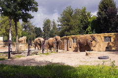 Elephants. Three elephants at the wall in the enclosure at the zoo Stock Photography