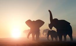 Elephants. Royalty Free Stock Photography