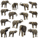 Elephants Stock Images