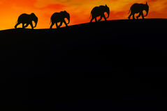 Elephants. A 3D render of elephants Stock Photo