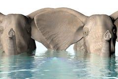 Elephants. A 3 D render of elephants Royalty Free Stock Photos