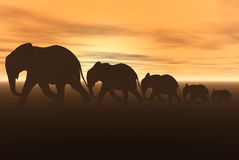 Elephants Stock Photo