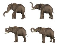 Elephants. Set of 4 3D rendered elephants Royalty Free Stock Image