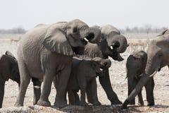Elephants Royalty Free Stock Photos