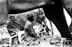 Among the Elephants. Elephant keepers relaxing with their animals on Sonepur Mela, Bihar, India Date: December 2007 Stock Photo