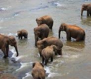 Free Elephants Stock Image - 8352881