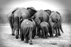 Free Elephants Stock Image - 93358661