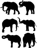 Elephants. Silhouettes of elephants in different poses Royalty Free Stock Images