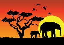 Elephants in africa Stock Photos