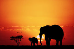 Elephants in African landscape Royalty Free Stock Photography
