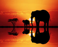 Elephants in African landscape at sunset. Illustration of elephants in African landscape at sunset Royalty Free Stock Images