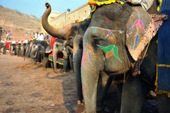 Elephants at amber fort. Painted working elephants lined up waiting to take passengers up to the amber fort in jaipur,rajasthan,india Royalty Free Stock Photos