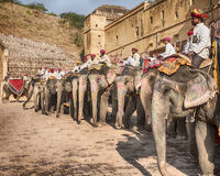 Elephants At The Amber Fort royalty free stock photos