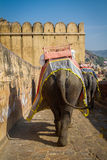 Elephants in the Amber Fort near Jaipur, India Royalty Free Stock Image
