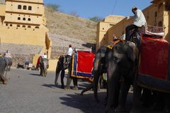 Elephants in Amer fort Rajasthan royalty free stock photos