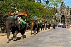 Elephants at Angkor Wat Stock Image