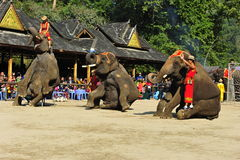 Elephants as Tourist Attraction�China Stock Photo