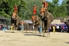 Elephants as Tourist Attraction�China Stock Photos