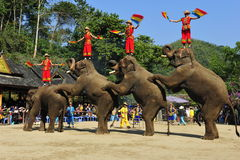 Elephants as Tourist Attraction,China Royalty Free Stock Photography