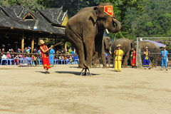 Elephants as Tourist Attraction,China Stock Photography