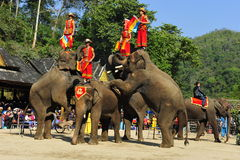 Elephants as Tourist Attraction, China. Elephants as tourist attraction Royalty Free Stock Images