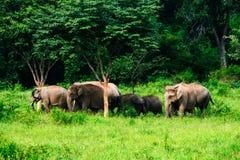 Elephants Asia Stock Photos