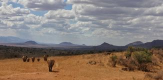 Free Elephants At African Savanna Of Tsavo West National Park Kenya Africa Royalty Free Stock Photos - 77334128