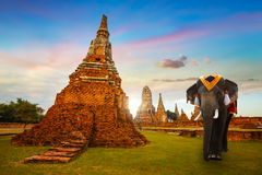 Free Elephants At Wat Chaiwatthanaram Temple In Ayuthaya Historical Park, A UNESCO World Heritage Site, Thailand Stock Photos - 92434243