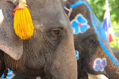 Elephants in Ayutthaya for the show. Royalty Free Stock Images