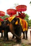 Elephants, Ayutthaya, Thailand. Royalty Free Stock Photo
