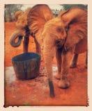 Elephants baby. Baby Elephants drinking Stock Photos