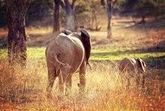 Elephants background Stock Image