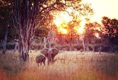 Elephants background Stock Photos