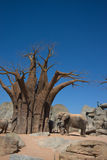 Elephants and baobab Stock Image