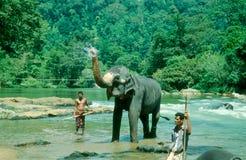 Elephants bathing Royalty Free Stock Photo