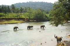 Elephants bathing Stock Photo