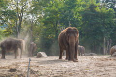 Elephants. In the Berlin zoo Stock Photography