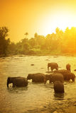 Elephants and bright sunrise Royalty Free Stock Photography